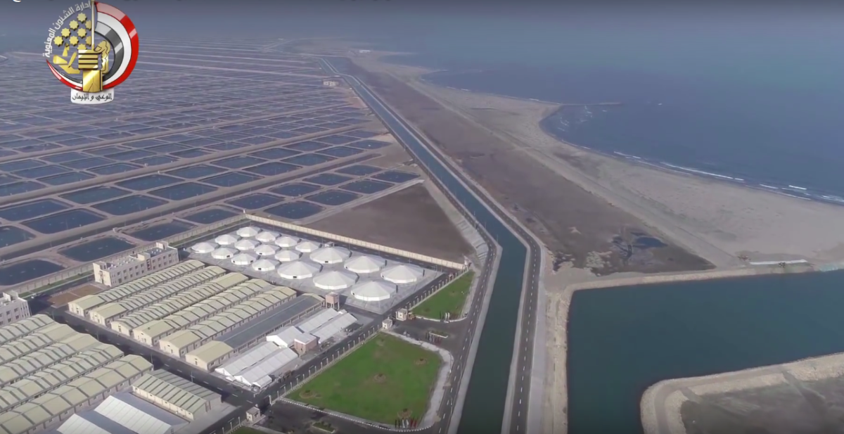 🍣🐟🇪🇬 Egypt creates the biggest fish and shrimps farm in the region — the giant Ghalioun farm